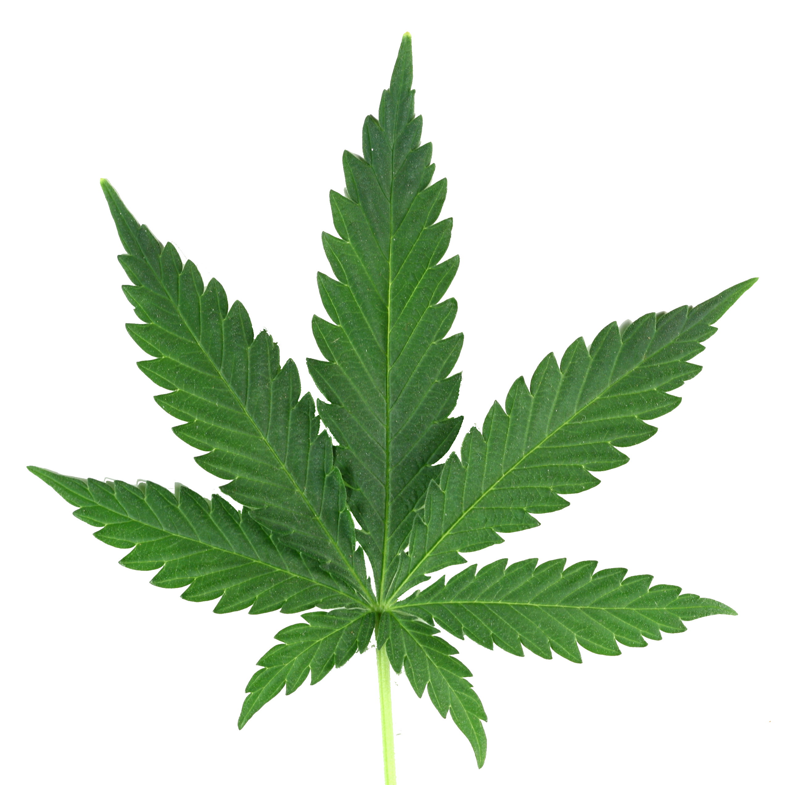 Pot Leaf Png & Free Pot Leaf.png Transparent Images #10360.