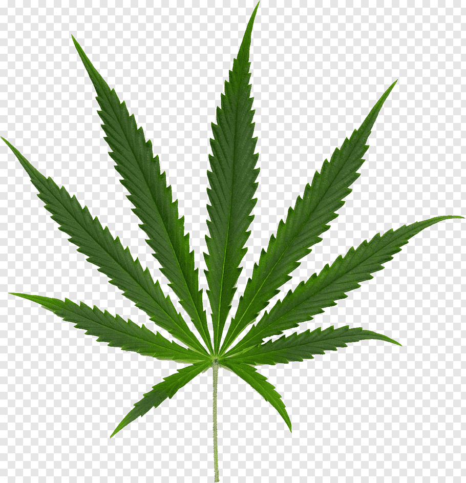 Cannabis Smoking cutout PNG & clipart images.