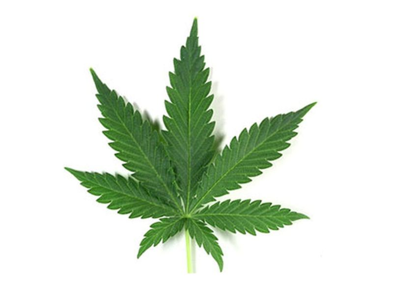 Decriminalizing Pot Doesn\'t Hike Teen Use, Study Finds.