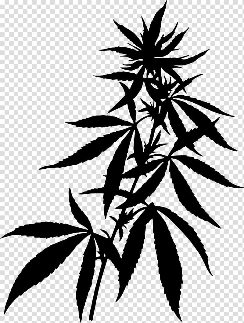 Medical cannabis Hemp , Pot plant transparent background PNG.
