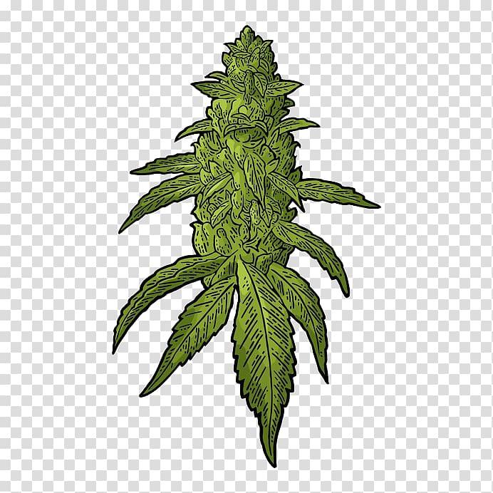 Green leafed plant illustration, Drawing Cannabis Hemp.