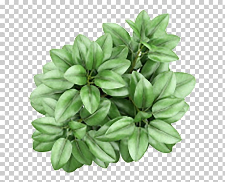 Houseplant Flowerpot Ceramic, plant, green leafed plant PNG.