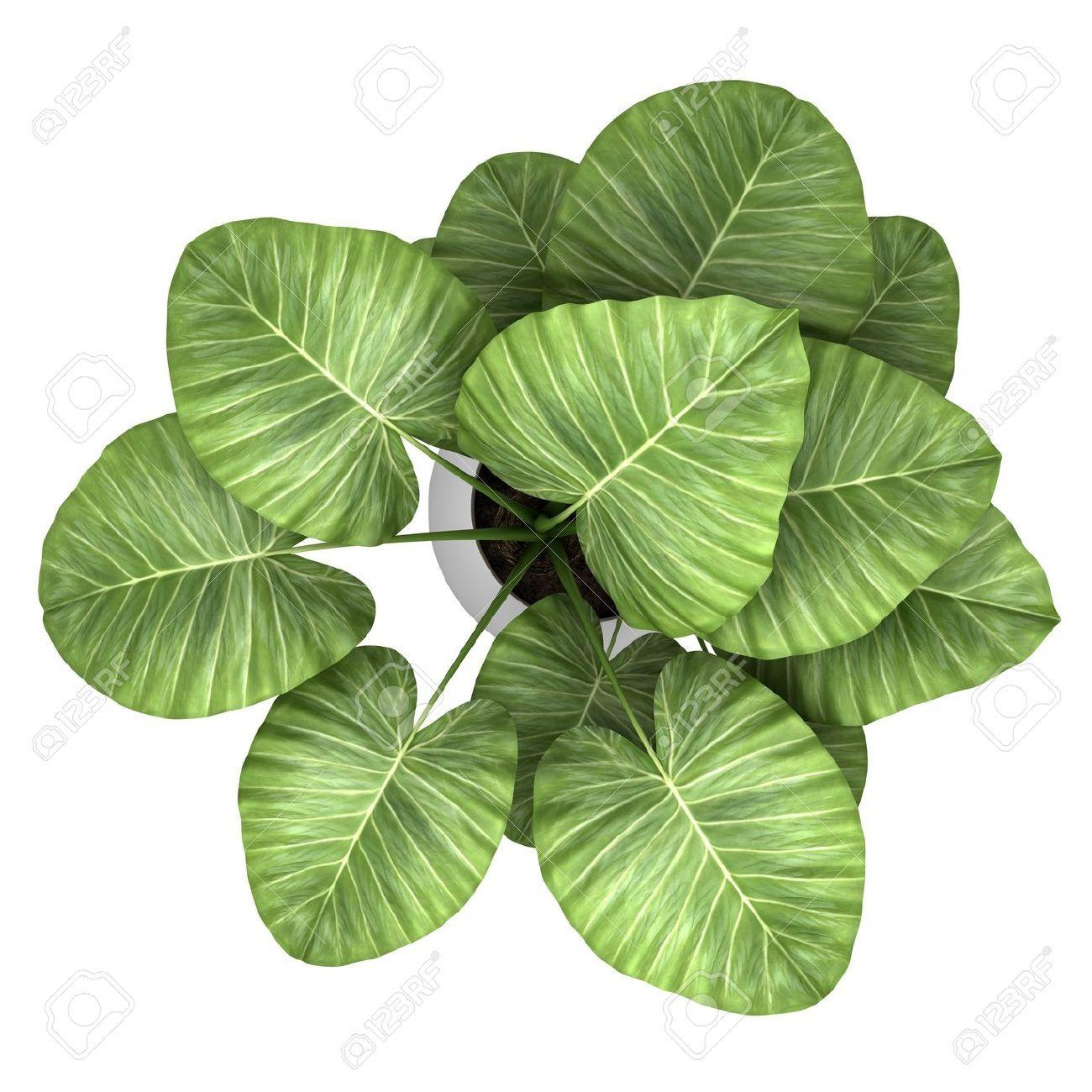 Pin by pratik bhatt on leaf.