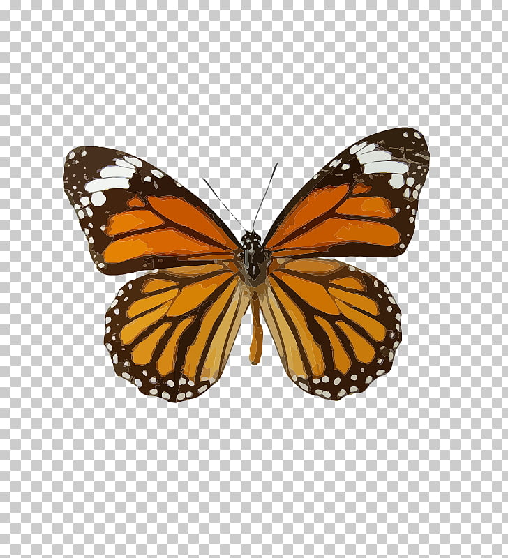 Monarch butterfly Insect Danaus genutia Butterfly weed, the.