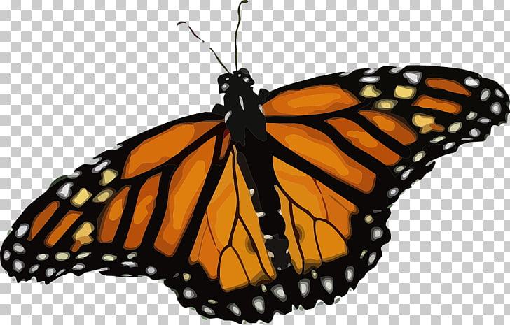 Butterfly weed Monarch butterfly, grasshopper PNG clipart.