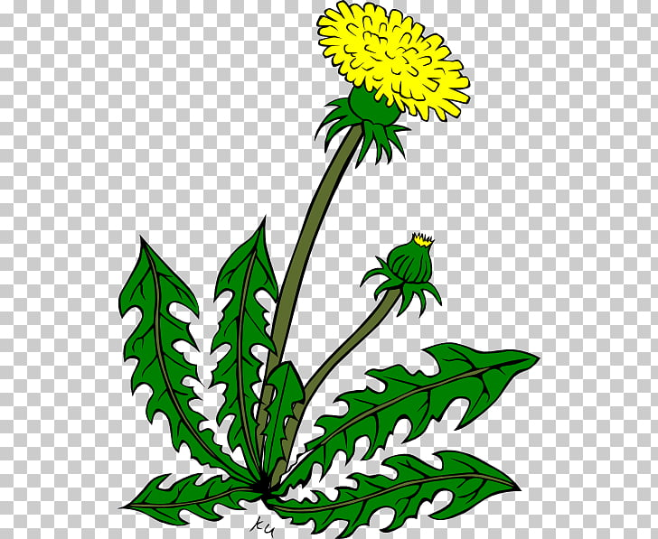 73 weeds Vector PNG cliparts for free download.