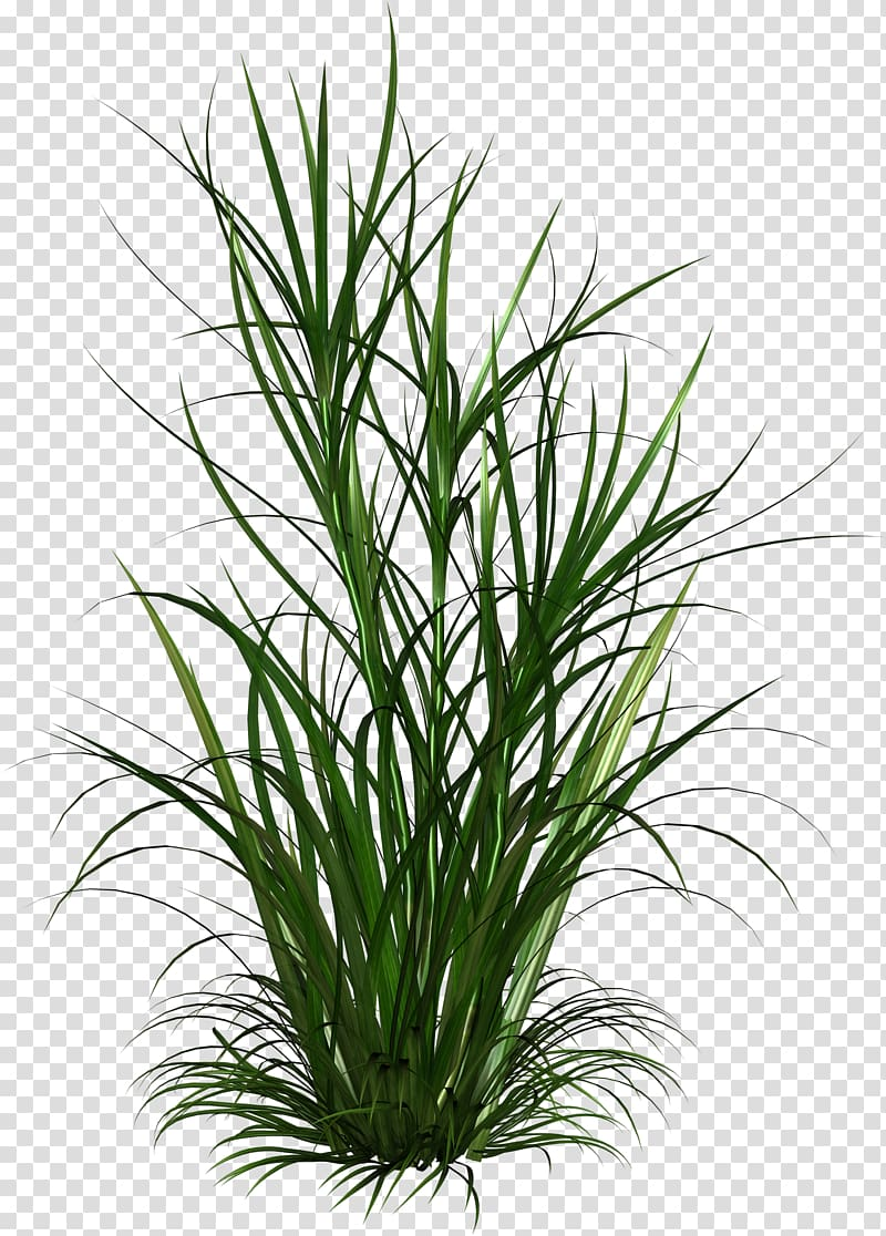 Born from Weeds & Rats , shrub plan transparent background.