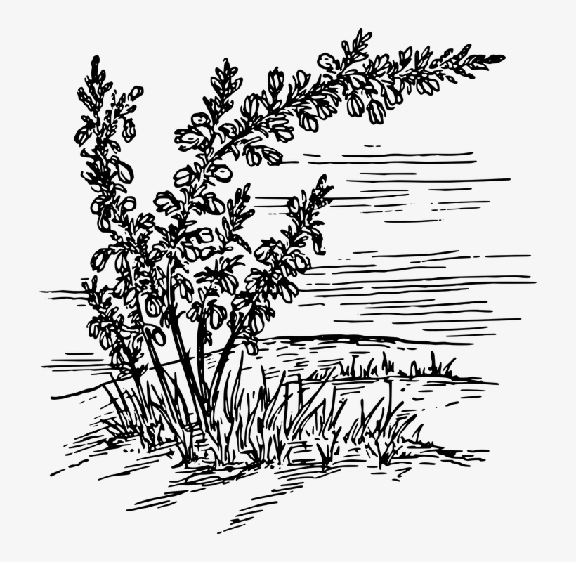 Weed Clipart Wild Plant.