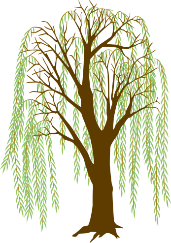 Weeping Willow Tree Black And White Tattoo Willow tree clipart - ...