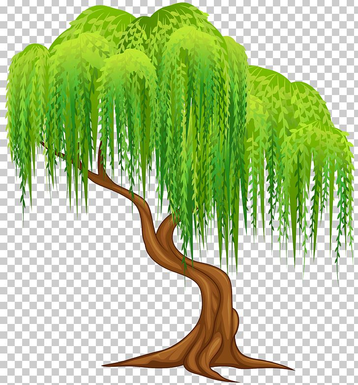 Weeping Willow Tree Wall Decal PNG, Clipart, Branch, Cartoon, Catkin.