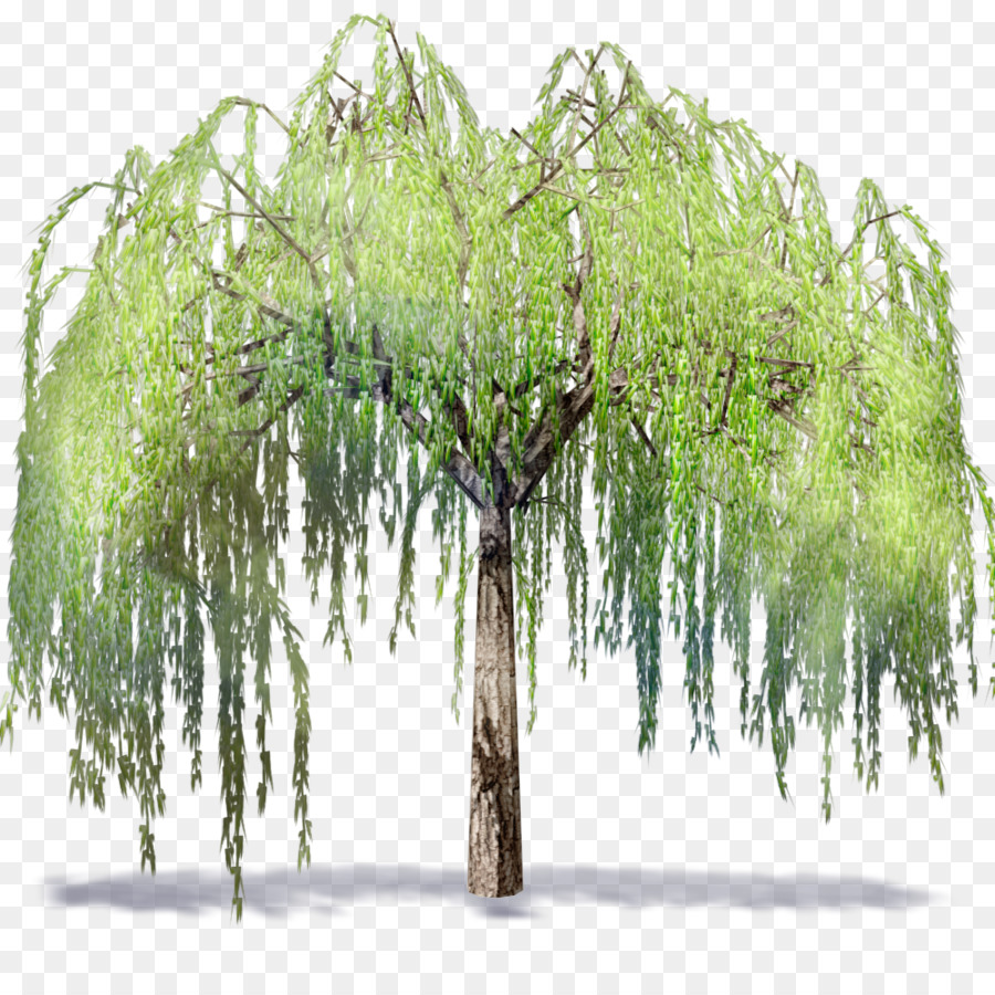 Family Tree Backgroundtransparent png image & clipart free download.