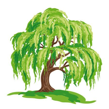 2,939 Willow Tree Stock Illustrations, Cliparts And Royalty Free.