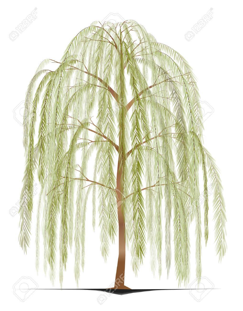 Weeping willow tree clipart 1 » Clipart Portal.