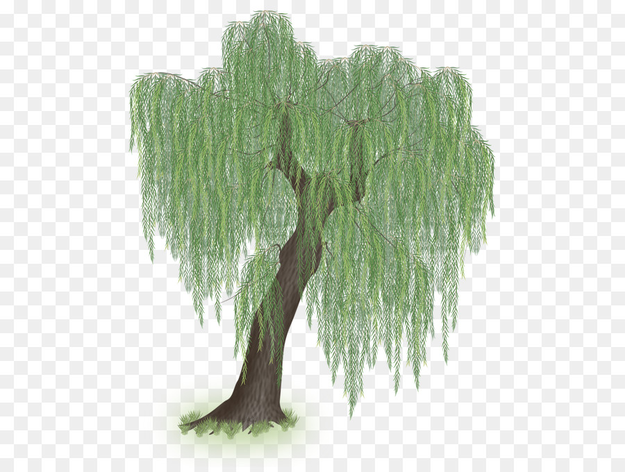 Larch Weeping willow Tree Clip art.