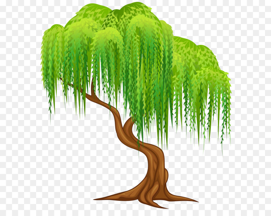 Tree Wall png download.