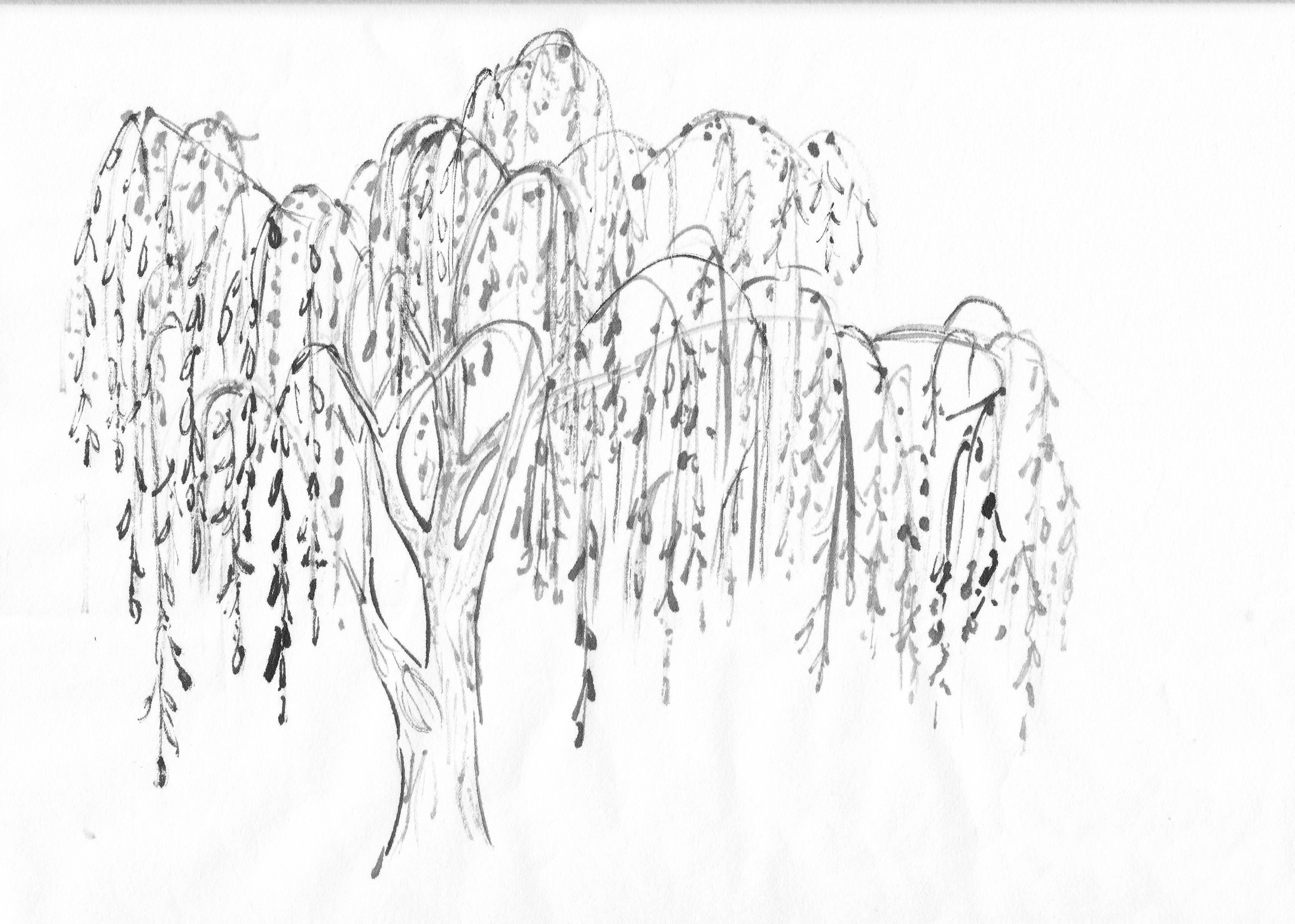 Weeping Willow Tree Original.