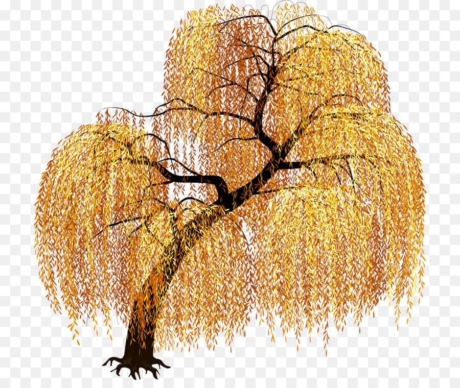Weeping willow Tree Image Graphics Clip art.