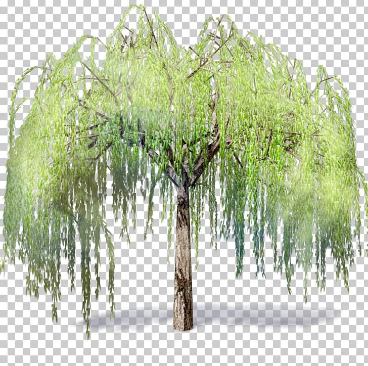 Weeping Willow Tree .dwg Autodesk Revit Building Information.