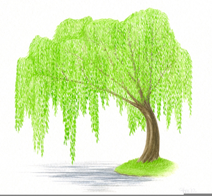 Weeping Willow Clipart.