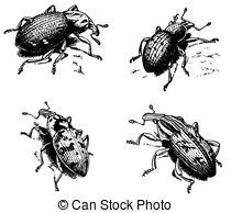 Ground beetles clipart #3