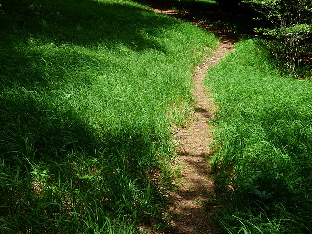 Path Trails Related Keywords & Suggestions.