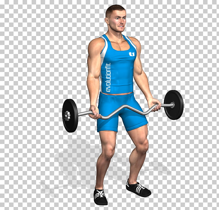 Weight training Barbell Biceps curl Dumbbell Squat, barbell.