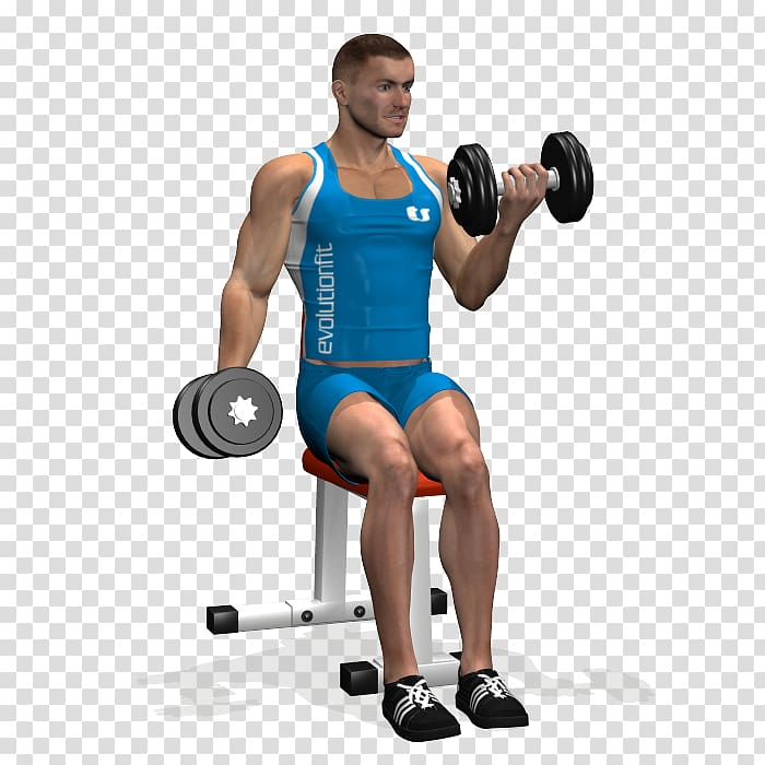 Weight training Bodybuilding Biceps curl Dumbbell.