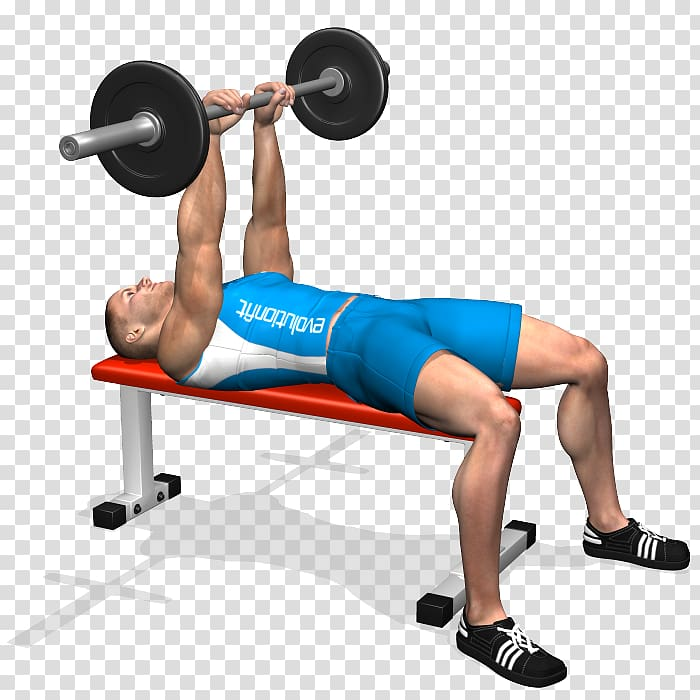 Weight training Barbell Bench press Triceps brachii muscle.