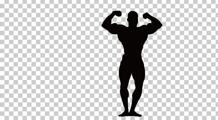 Bodybuilding Physical Fitness Fitness Centre Olympic.