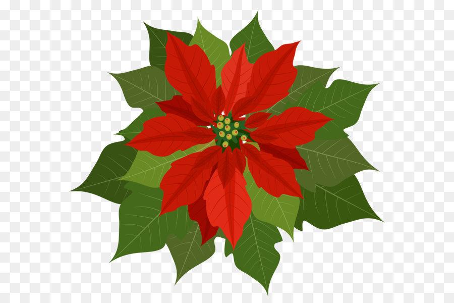Weihnachtsstern Clip art.