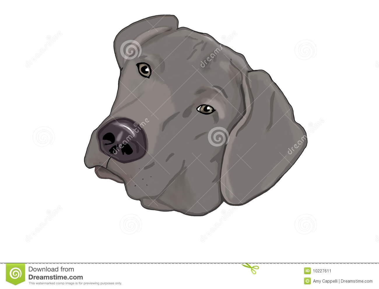 Weimaraner Dog Stock Illustrations.