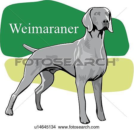 Weimaraner Clipart EPS Images. 25 weimaraner clip art vector.