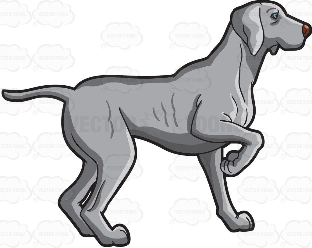 A Weimaraner Dog In Training Cartoon Clipart.