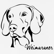 Image result for how to draw a weimaraner.