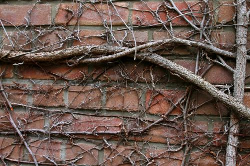 Free photos entwine search, download.