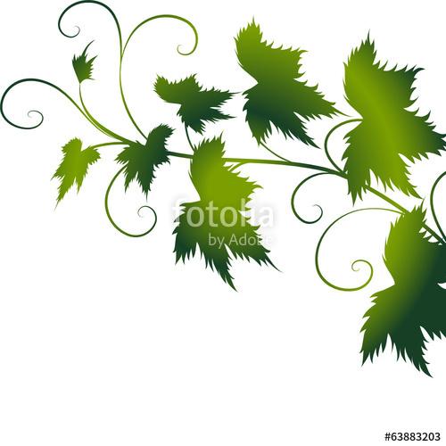 "weinblatt,weinblätter,floral,frühling,rahmen,wein,vektor, "" Stock."