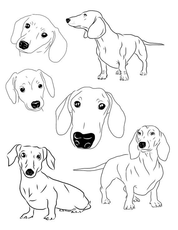 Dachshund Clipart set of 6 Dachshund Download Printable.