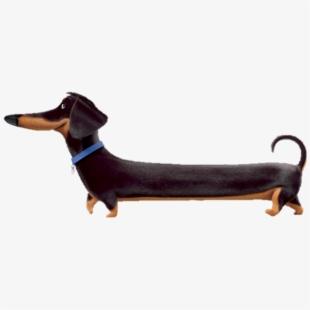 Weiner Dog Png.