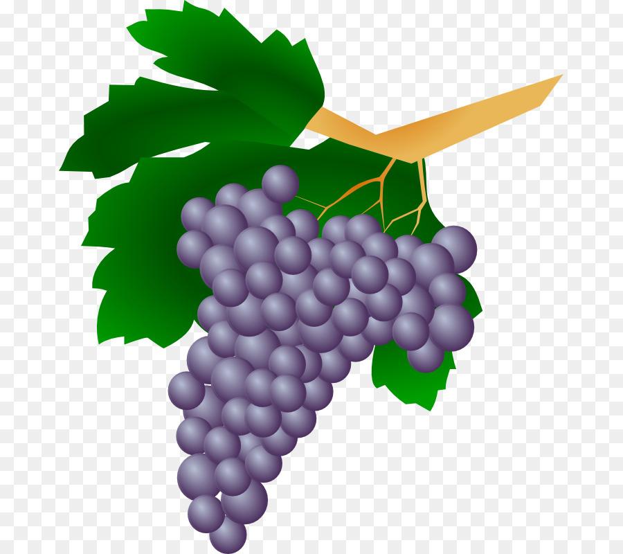 Weinrebe Wein.