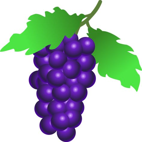 grapes Clipart.