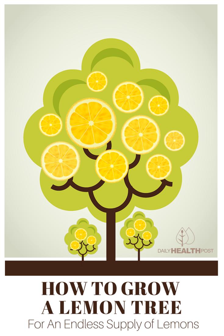 How to Grow a Lemon Tree For An Endless Supply of Lemons.
