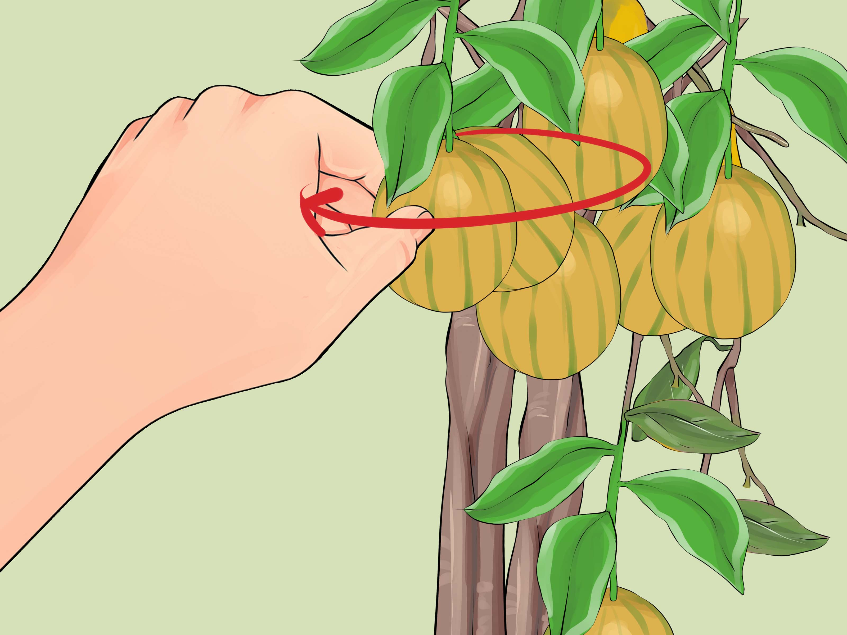 3 Ways to Grow Lemon Trees Indoors.