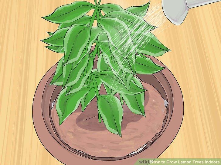 3 Ways to Grow Lemon Trees Indoors.