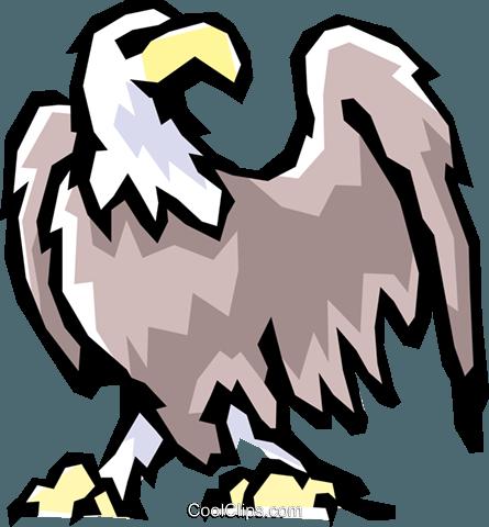 Weißkopfseeadler Vektor Clipart Bild.