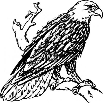 Weißkopfseeadler ClipArt.