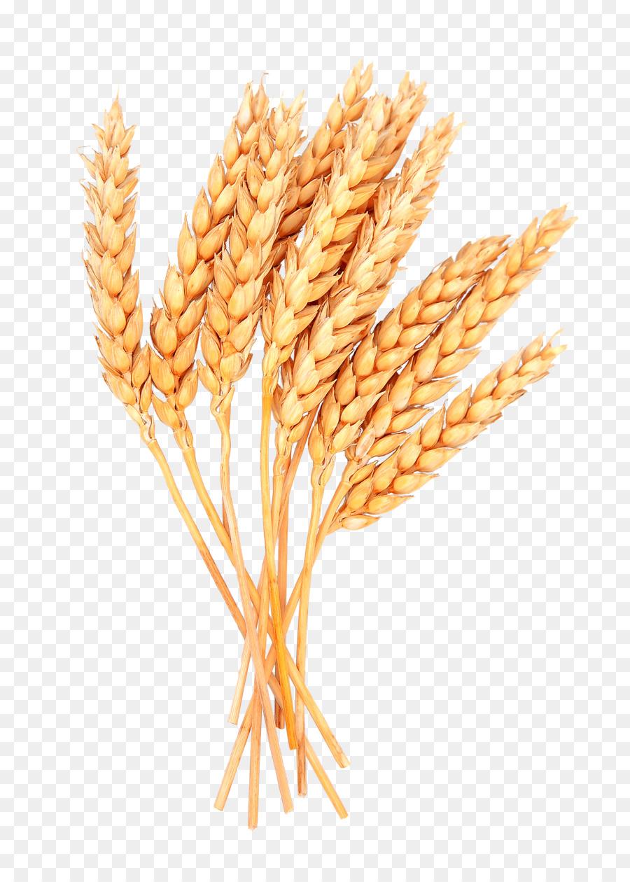 Garbe Getreide.