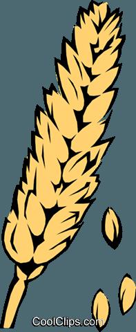 Wheat Royalty Free Vector Clip Art illustration.