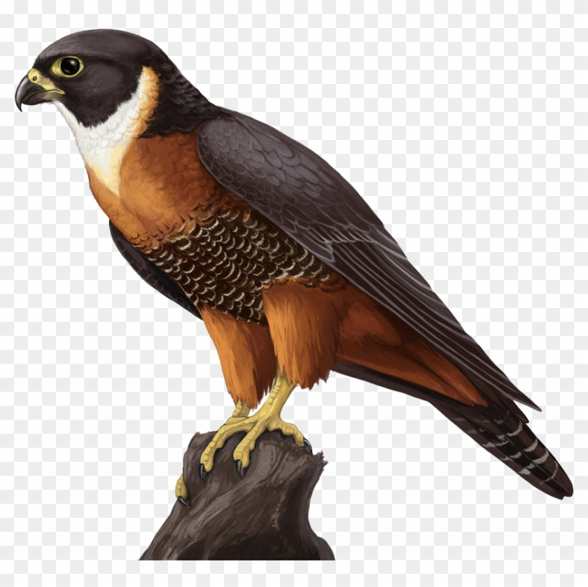 Falcon Png.