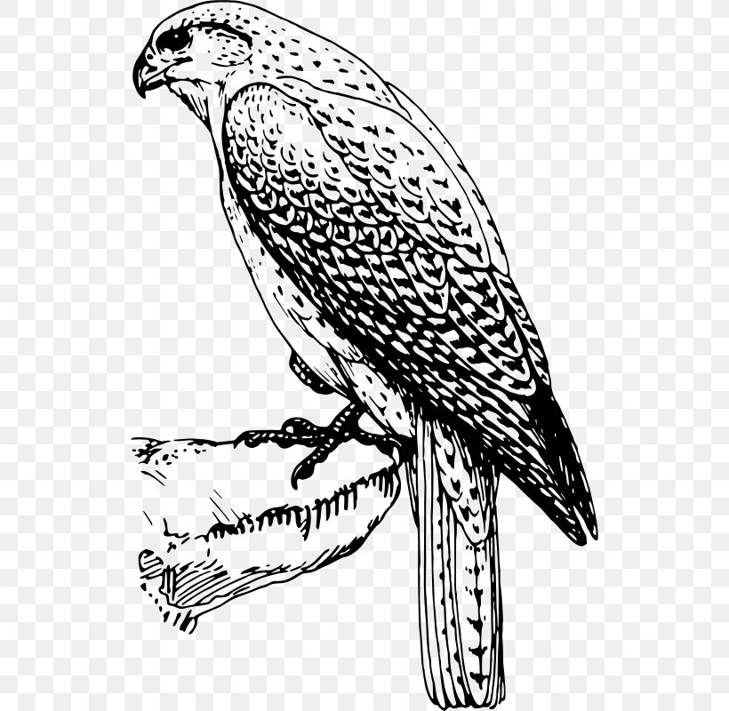 Hawk Falcon Black And White Bird Clip Art, PNG, 526x800px.