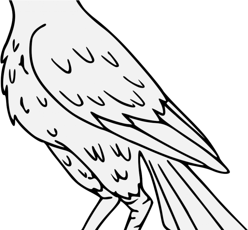 Falcon Drawing Png Clipart.